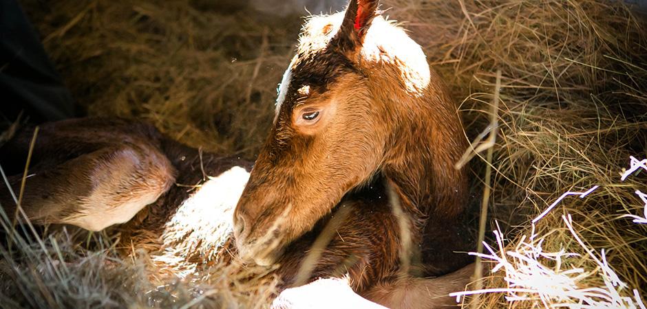 Foal-slider-1