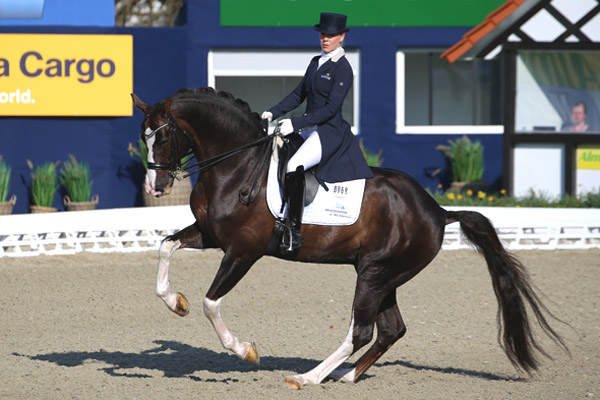 Simply In Season >> Benicio Stallion | Callaho Warmblood Sport Horses