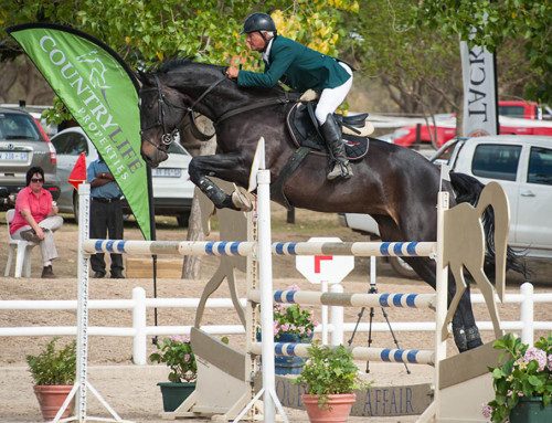 Callaho horses impress at the 2015 Burlington Cup
