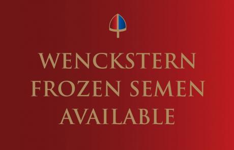 Wenckstern